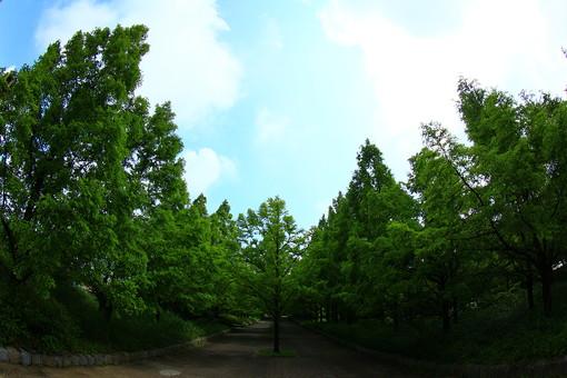 自然 風景 景色 環境 スナップ 旅行 散歩 公園 森林 緑 林 休息 空 春 夏 季節 葉っぱ 植物 のどか 田舎 丘 開けた 見通し 晴れ 子供 遊ぶ 走る 癒し 広い 土地 緑豊か 未開発