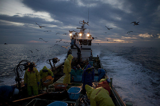 屋外 野外 漁 海上 漁獲 漁り 魚 獲る 漁業 海 水揚げ 大量 大漁 釣り 漁獲 早朝 船 船上 漁船  網 引き揚げ 捕獲 人 人物 漁師 早朝