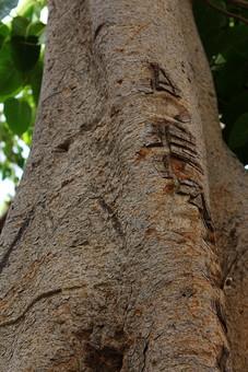 葉 葉っぱ 枝 木 木の葉 自然 植物 屋外 背景 背景素材 テクスチャ テクスチャー バックグラウンド  環境 エコ 木漏れ日 こもれび さわやか 爽やか 大木 見上げる 木肌 空