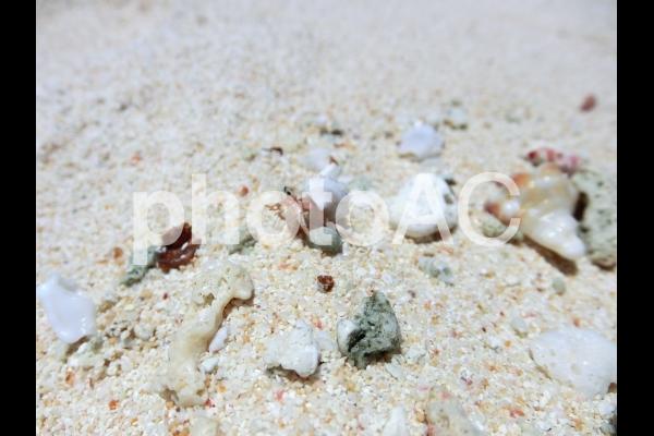 白い砂浜とヤドカリの写真