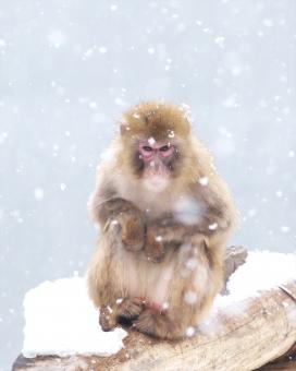 円山動物園の人気者の写真