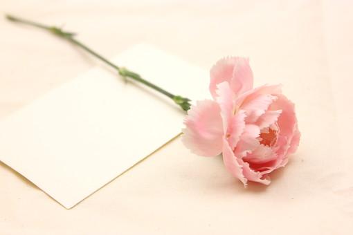 花 カーネーション 母の日 ピンク バック コピースペース 淡い 年中行事 切り花 植物 かわいい イベント メッセージ カード