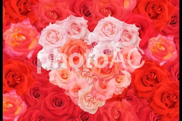 ハート型の赤とピンクのバラの写真
