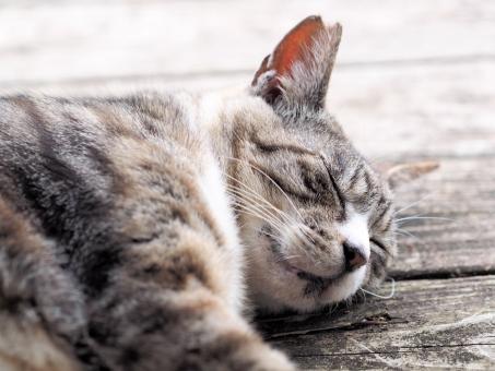 猫 眠り 睡眠 生き物 可愛い