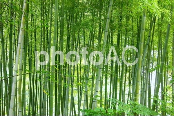 竹林-1の写真