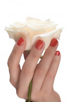 バラ 白バラ 花 フラワー 植物 花びら 花弁 茎 白 ホワイト 女性 おんな 女 ウーマン レディ 肌 素肌 マニキュア 爪 ネイル 赤 手 右手 手指 指先 ハンド 持つ つかむ 触る 触れる はさむ 摘む ハンドポーズ ポーズ ハンドパーツ パーツ 白バック 白背景