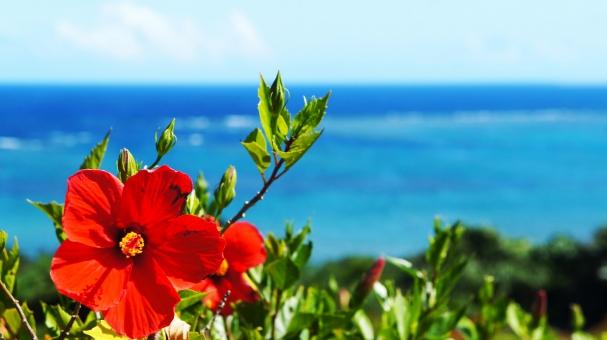 「沖縄 フリー素材」の画像検索結果