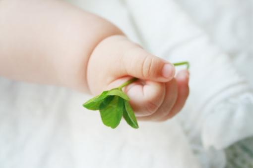 小さな手の中の幸せの写真
