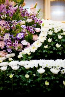 葬儀 葬儀場 告別式 通夜 お別れ 別れ 花 植物 菊 白菊 緑 グリーン 祭壇 冥福 祈る 悲しみ コピースペース 咲く 蕾 つぼみ ゆり 百合 ユリ カーネーション 葬儀イメージ 終活 寂しさ さびしい 悲しい 思い 思い出
