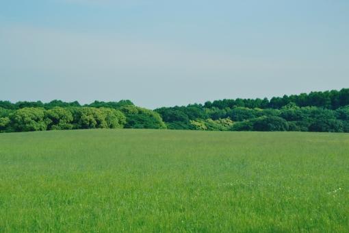 草原と青空 横の写真