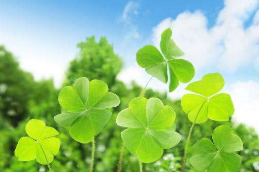 背景 テクスチャ 素材 背景画像 バックグラウンド バッググラウンド 自然 植物 エコロジー 夏 春 環境 エコ クローバー eco 葉っぱ 四葉 四つ葉 四つ葉のクローバー 葉 青 空 雲 青空 緑 グリーン さわやか 黄緑 自然エネルギー 若葉 初夏 三つ葉 ラッキー 幸福 幸せ 幸運 光 ハッピー 緑色 新緑 風景 明るい 屋外 コピースペース エコロジーイメージ 背景素材 クリーンエネルギー 草 晴れ イメージ シロツメクサ 縁起物 bg 白詰草 昼 日本 真夏 しろつめくさ 野原 テクスチャー 癒し 草原 花 草花 四月 五月 六月 いやし マクロ クローズアップ アップ 接写 美容 エステ 4月 5月 清潔 涼しい 涼しげ 青葉 爽やか リラクゼーション リラックス ブルー 健康 清々しい 5月 6月 7月 壁紙 テキストスペース バック 背景写真 6月 7月 8月 4月 清涼 爽快 景色 みどり 公園 戸外 かわいい きれい バックイメージ バックグランド 綺麗 白 文字スペース シロツメグサ 四葉のクローバー 青色 清涼感 快晴 イエローグリーン イエロー 瑞瑞しい 黄緑色 黄 季節 シンプル グリーンイエロー ハート型 カタバミ 雨上がり 自然観察 散策 散歩 発見 俯瞰 上から ボケ味 レトロ トイカメラ トイデジ ボケ ぼけ 背景ぼかし 風力発電 背景ボケ ボケ表現 春イメージ 夏イメージ アウトドア 観察 レジャー 医療 ビジネス 福祉