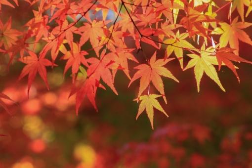 秋の彩りの写真