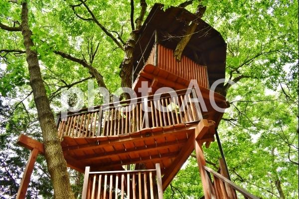 公園 ツリーハウスの写真