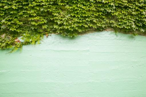 壁 カベ かべ 緑 グリーン つた 蔦 ツタ 葉 植物 素材 テクスチャ 背景 背景素材 バック バックグラウンド