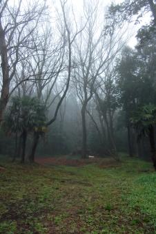 霧 靄 霞 天気 天候 weather 朝 早朝 森 山 曇天 曇り空 閑静 自然 緑 風景 景色 樹木 森林 木々 木立ち 穏やかな風景 穏やかな景色 静寂 散歩 モノトーン monotone monochrome モノクロ 植物