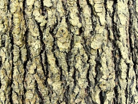 ブラウン 木 樹木 木肌 デコボコ 自然 ネイチャー ナチュラル ナチュラルテイスト テクスチャ テクスチャー ざらざら 木目 エコロジー アウトドア 爽やか さわやか 植物 ボタニカル