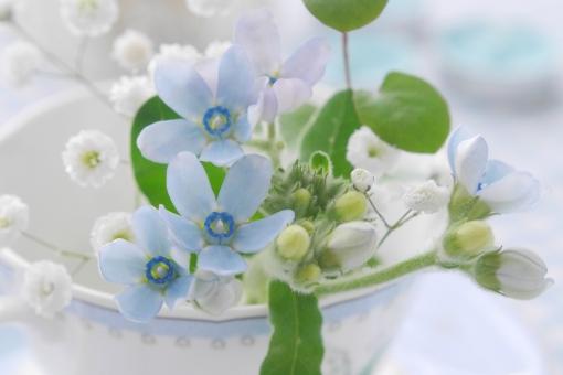 カップの花(ブルースター)の写真