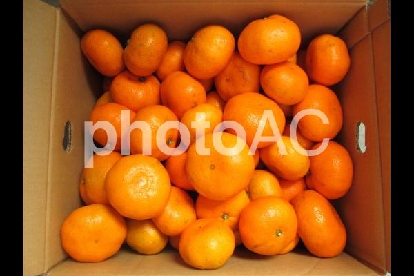 蜜柑箱の写真