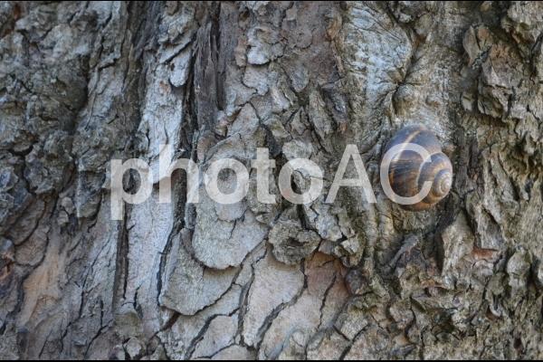 木の皮とカタツムリの写真