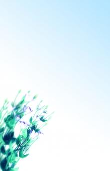 淡いブルーボカシと桔梗 の写真