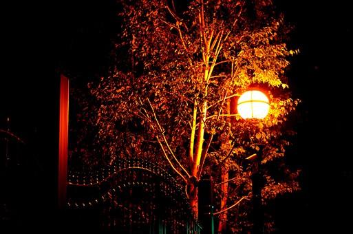 夜 夜景 洋館 屋外 外 景色 風景 建物 家 建物 建造物 空 夜空  樹木 自然 樹 木 植物 欧米風 門 鉄 金属 施錠 電気 街灯 照明