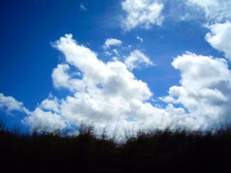 ハワイ hawaii 草原 青 外国 緑 青空 空 自然 駆ける 風景 景色 絵本 きれい