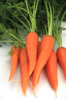 人参 ニンジン にんじん 野菜 植物 食べ物 葉付き オレンジ 沢山 白バック 緑 みどり 縦向き