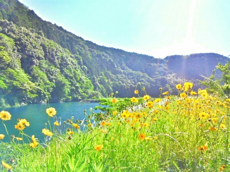 春 スプリング 快晴 晴れ 晴天 青空 青い 空 そら スカイ 水色 みずいろ 山 やま グリーン 緑 みどり 川 かわ 草 草花 花 フラワー きいろ 黄色 イエロー きみどり 黄緑 さわやか 爽やか 風 気持ちいい リフレッシュ 癒し 田舎 ゆっくり 散歩 サイクリング 自転車 チャリ 自然 しぜん 風景 景色 休日 休み 潤い うるおい キレイ 綺麗 きれい ビューティフル 美しい 新緑 四国 高知