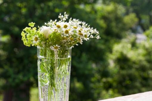 グリーン 緑 植物 自然 花 バラ ばら 薔薇 華やか 豪華 ゴージャス エレガント 可愛い かわいい 可憐 ローズ 白 白薔薇 白バラ カモミール ハーブ 観葉植物 ブーケ 花束 背景 壁紙 水滴 クローズアップ 清楚 エコ eco 窓 風景 窓辺 花瓶 グラス 生け花