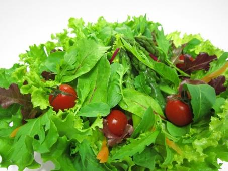 サラダ グリーンリーフ 葉っぱ レタス 水菜 ミニトマト 野菜 グリーンサラダ ベジタブル ベビーリーフ ルッコラ プチトマト