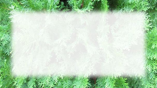メッセージ スペース 植物 緑 テキスト フレーム 葉 素材 背景 カード コピー 草 色 季節 デザイン パターン 半透明 風合い 白抜き コノテガシワ コニファー バックグランド アイキャッチ 16:9 デザイン(装飾) 9:16