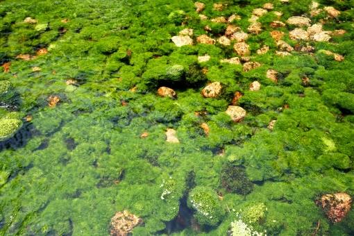 藻類」に関する写真|写真素材な...