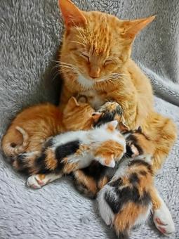 授乳中のネコ3の写真