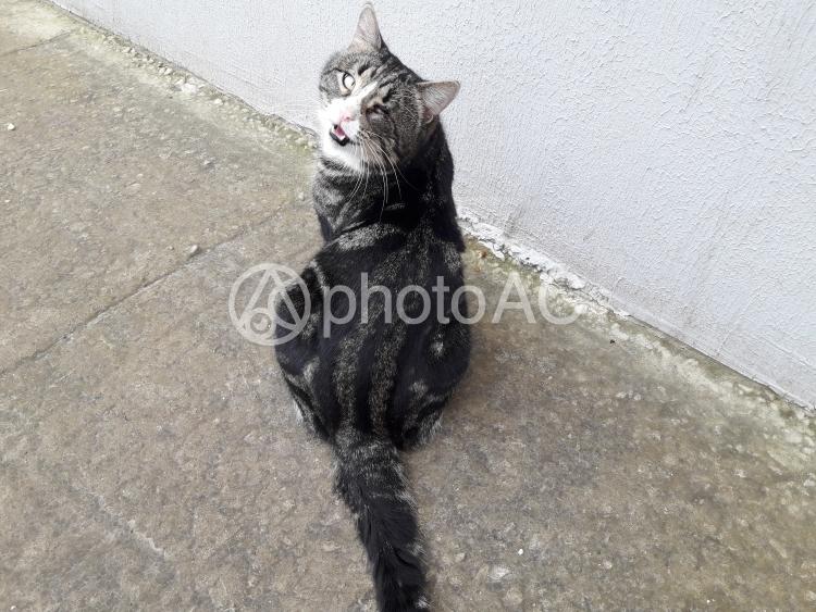 片目川字の猫の写真