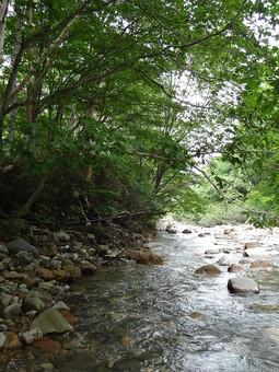 静か 喉か 平和 大地 自然 環境 問題 エコ 活動 風景 田舎 植物 リーフ 草 大自然 生い茂る 茂る 緑 深緑 晴れ 山 樹木 晴天 快晴 青空 澄み渡る 濃い 川 川沿い 水辺 石 岩 川辺 渓流 浅い 緩やか 穏やか