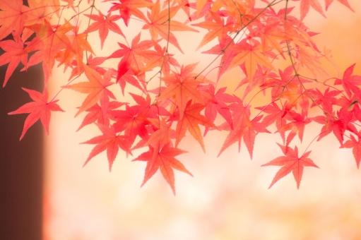 京の紅葉11の写真