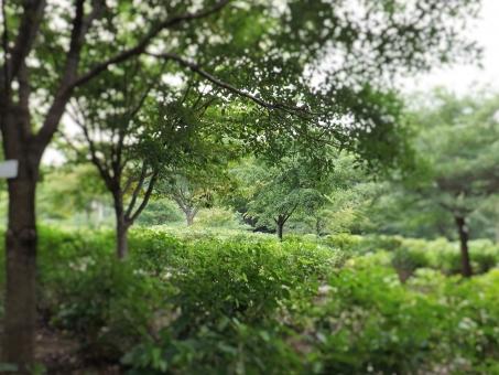 自然 新緑 しんりょく 木 木立 いやされる みどりがきれい 緑が綺麗 しぜん 緑 ミドリ みどり 目に優しい 気持ち良い いやし 癒し さんぽ 散歩 ウオーキング 公園 癒される 植物 体にやさしい からだにやさしい
