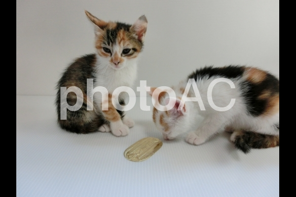 猫に小判10の写真