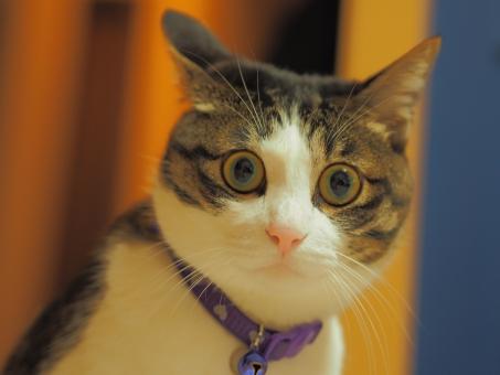 猫 ねこ ネコ cat びびり 恐怖 ヘタレ 怖い 恐い おそろしい びっくり 驚き 驚く