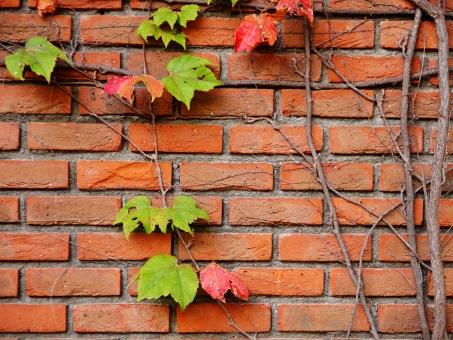 煉瓦 レンガ れんが つた 色づき 葉 赤 秋 背景 壁 歴史 古風 レトロ