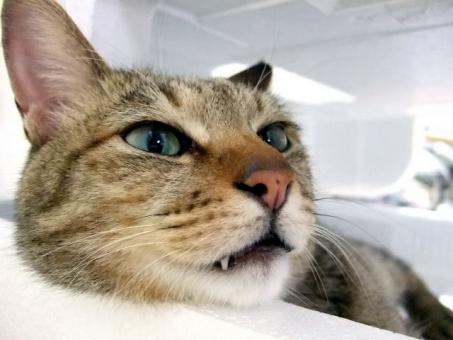 猫 ネコ ねこ 顔 マクロ 接写 目を開けた 上の空 表情 横顔 だらける うつろ 考え事 寝そべった 鼻 遠い目 瞳 耳 リラックス くつろぐ やる気なし 快適空間 家猫 飼い猫 室内猫 かわいい 動物 睡魔 ちゃこ ぼんやりする