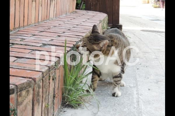 猫25(Okinawa)の写真