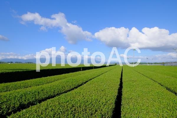 茶畑横の写真