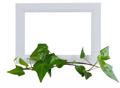 蔦 つた ツタ 緑 グリーン 植物 自然 ナチュラル 観葉植物 葉っぱ 木 フレーム 枠 木枠 小物 インテリア 背景 タイトルバック 爽やか 癒し テキストスペース キイロイトリ パス 白いフレーム フォトフレーム 額縁 白 ホワイト クリッピングパス キリヌキ 切り抜き きりぬき 看板 飾り枠