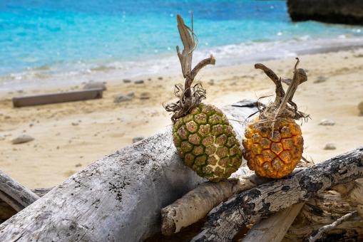南国イメージ 砂浜の写真