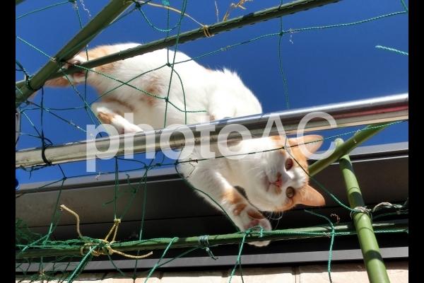 棒渡をする猫1の写真