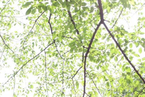 木漏れ日 植物 木 葉 陽射し ひざし 枝 自然 晴れ 昼 朝 公園