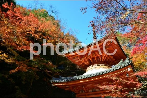 大威徳寺の紅葉5の写真