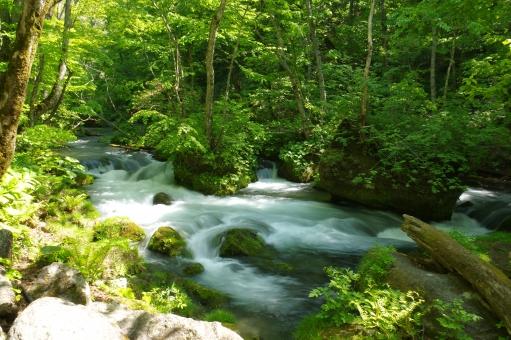 川 流れ 水 渓流 奥入瀬 奥入瀬川 源流 マイナスイオン リラックス 森林 植物 グリーン 水辺 自然 景色 風景 背景 十和田湖 トレッキング アウトドア 散策 緑