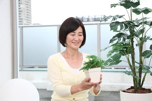 マダム おばさん 熟年 中年 老人 笑顔 スマイル 人物 女 おばあちゃん 植物 植木 鉢植え 緑 60代 日本人 園芸 ガーデニング 観葉植物 グリーン ベランダ マンション 育てる 世話する 笑顔 スマイル 趣味 ライフスタイル シニアライフ mdfs002